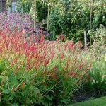 Beplantingsplan en een tuinontwerp