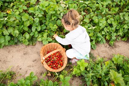 Kindvriendelijk tuinontwerp