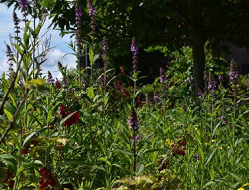 Voordelen van een groene tuin