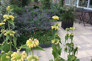 Bloemrijke voortuin geschikt voor bijen en vlinders