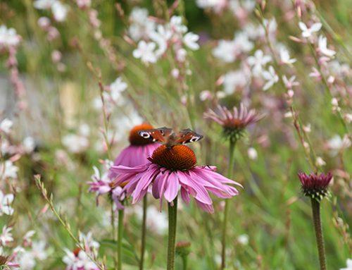 Kies vandaag nog voor een natuurlijke tuin