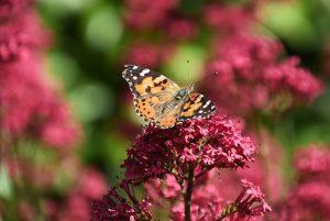 Beplanting impressie vlinder vriendelijk