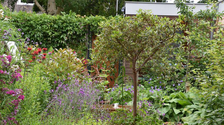 Maak minimaal 60 procent van uw tuin groen. Kies voor de delen die wel verhard worden, voor half verharding, waterdoorlatende klinkers of een terras met brede voegen. Hierlangs kan het water nog de bodem in zakken. Houd rekening met de ligging van uw tuin. Waar komt de zon? Waar is de grond droog of juist vochtig? Dit is belangrijk bij het kiezen van de juiste planten en bomen voor uw tuin. Plaats een regenton. Zo vangt u het regenwater op. In droge periodes hoeft u geen kraanwater te gebruiken. Kies voor een groene afscheiding. Een groene haag trekt dieren aan en zuivert de lucht. Liever geen haag? Kies dan voor een begroeid hekwerk of een tuinscherm van wilgentenen.